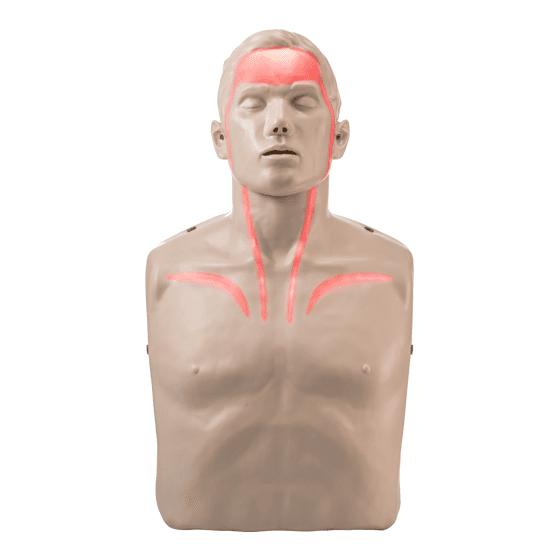 Brayden Pulse CPR Manikin>